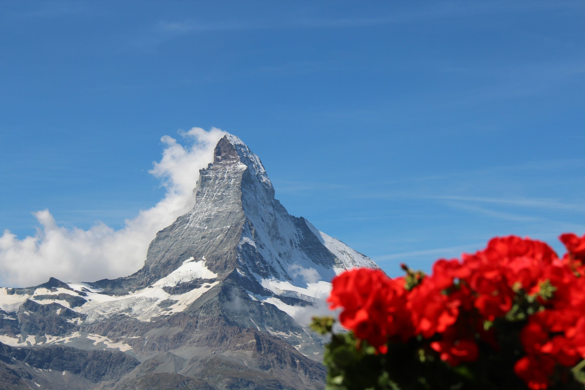 Flowers at the Matterhorn