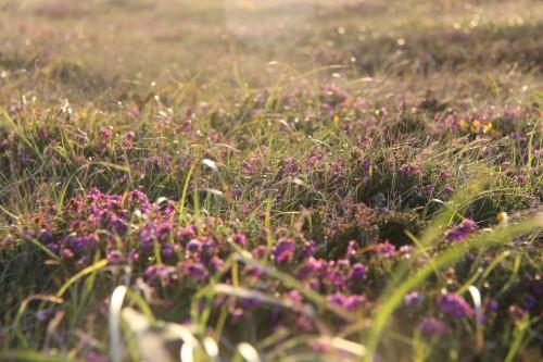 Colourful Grass - North Cornish Coast